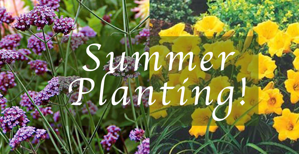 What To Plant This Summer