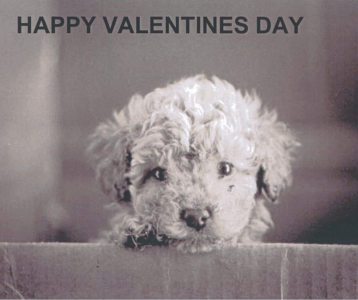 A Valentines Day Message